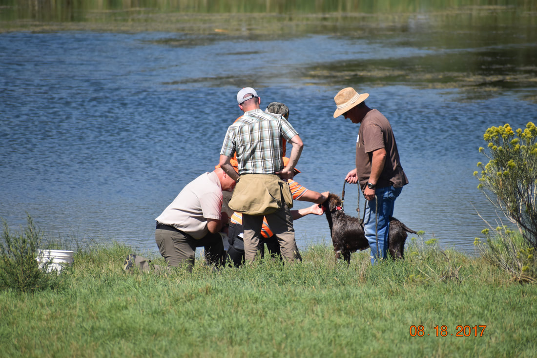 FUN IN THE FIELD PICS - Welcome to Wirehaired Griffons of Colorado